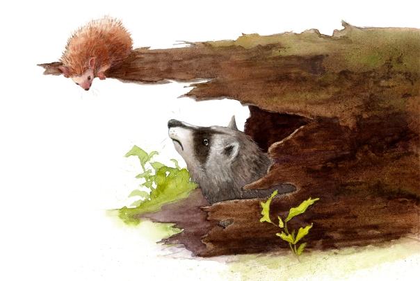 hedgehog-p10-11-v5-900px.jpg