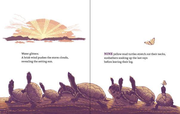 turtle spread